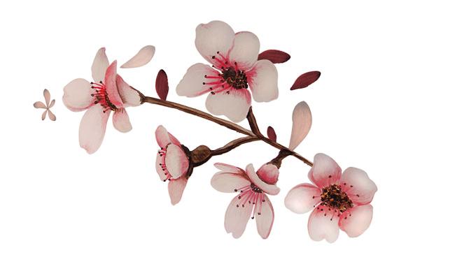 Aromas de Andalucía sakura