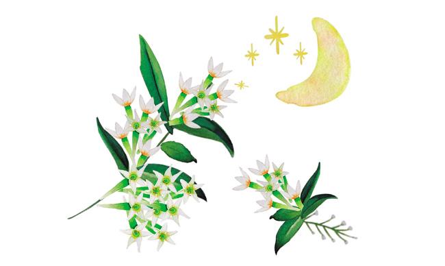 Aromas de Andalucía dama de noche