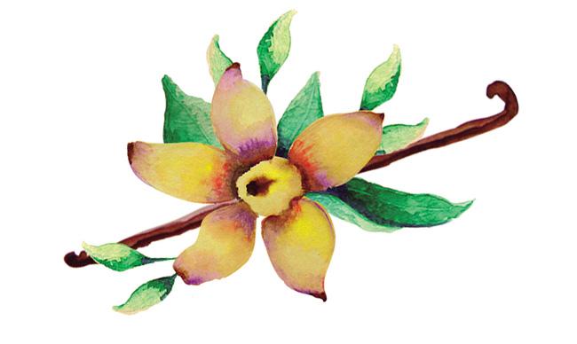 Aromas de Andalucía flor de vainilla