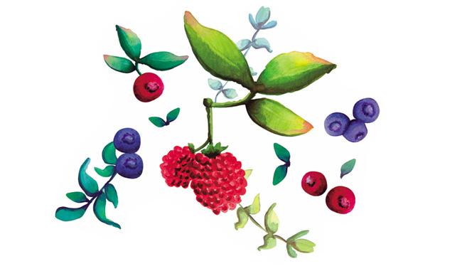 Aromas de Andalucía frutos silvestres
