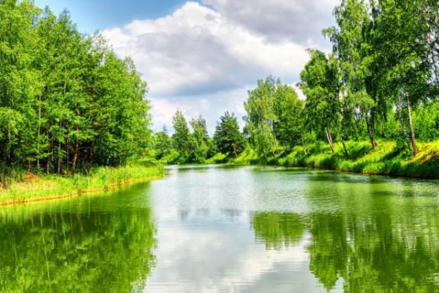 bosque verde cromoterapia